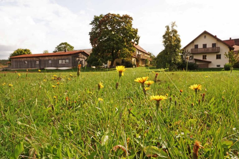 Ferienwohnung Greinhof -Wiese
